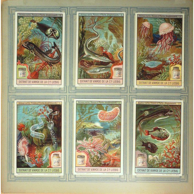 Chromo LIEBIG-S1133-ANIMAUX MARINS, POISSONS et PLANTES PHOSPHORESCENTS-1922/23